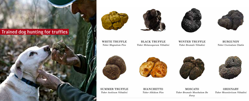 Types-of-truffles